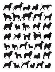Popular dog breeds illustration