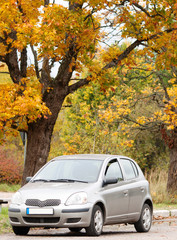 Small economy car in the autumn forest