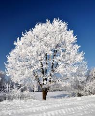 Winter tree in Czech Republic