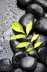therapy black zen stones and plant in water drops