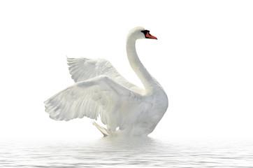 Papiers peints Cygne White swan.