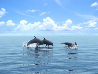 Photo sur Aluminium Dauphins Three dolphins floating at ocean.