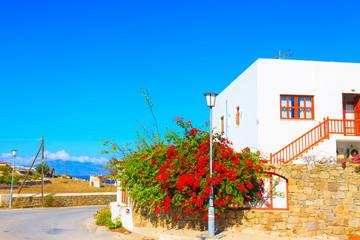 Colorful flowers by street view Mykonos Island Greece Cyclades