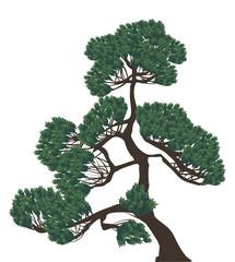 green single pine on white illustration
