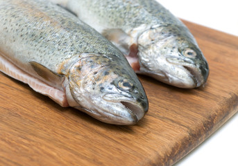 Trout fish close up