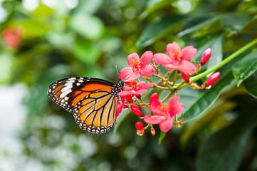 Butterfly, Beautiful
