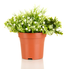 Decorative flowers in flowerpot isolated on white