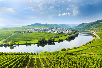 Foto auf Leinwand Weinberg famous Moselle Sinuosity with vineyards