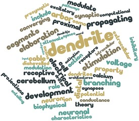 Word cloud for Dendrite