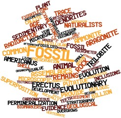 Word cloud for Fossil