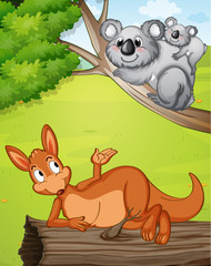 In de dag Beren A kangaroo and koalas