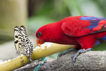 Butterfly and Parrot sharing food in Green House