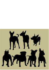 silhouette of the dogs