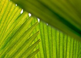 Hintergrund Palme Blatt