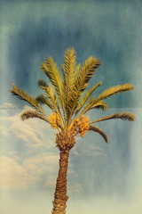 Grunge palm tree with dates over blue sky