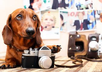 Dog with camera