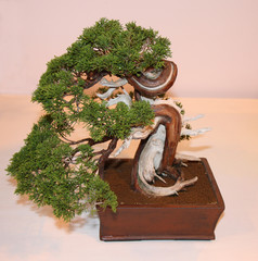 A Twisted Craft Design of a Bonsai Tree.
