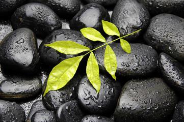 Branch leaf on wet pebble