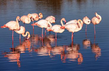 Photo sur Aluminium Flamingo flamants roses