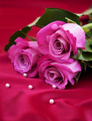 Roses on satin background
