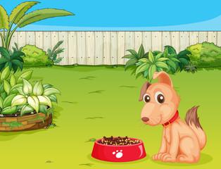Foto auf Leinwand Hunde A dog and a food