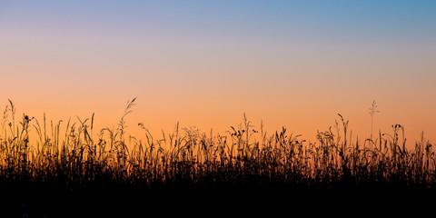 Grass field silhouette