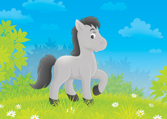 Foto op Textielframe Pony Foal on a meadow