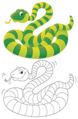 Green striped snake