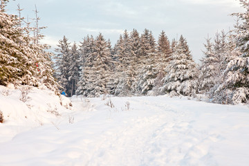 Beautiful winter landscape with snow covered fir trees.
