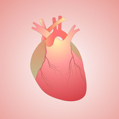 digital illustration of a human heart