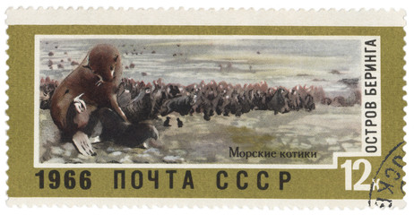 Bering Island, seals on post stamp