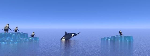 orca, penguin