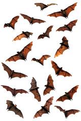 Spooky Halloween fruit bats