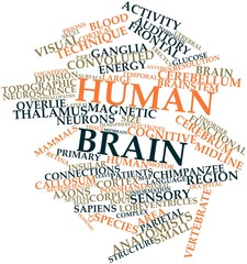 Word cloud for Human brain