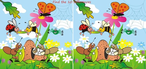 insect 10 differences
