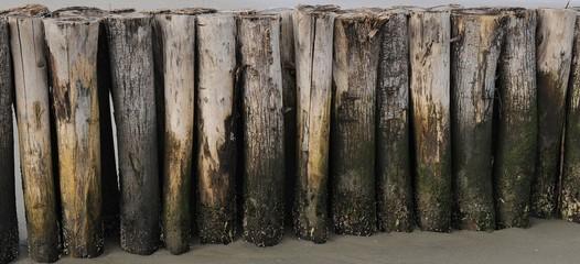 Tronchi di legno in spiaggia