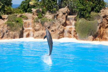 Photo sur Aluminium Dauphins Delfines
