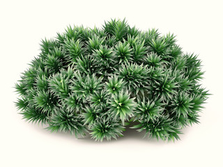 Exotic plant bush