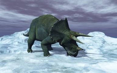 tricératops sur la glace
