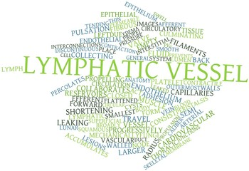Word cloud for Lymphatic vessel