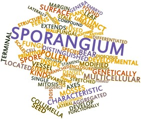 Word cloud for Sporangium