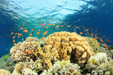 Beautiful Coral Reef and Tropical Fish in ocean