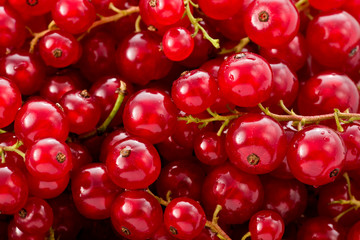 Red Currents (Ribes rubrum)