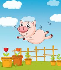 Poster Ranch A pig
