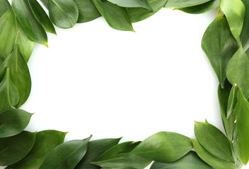 beautiful green leaves, isolated on white