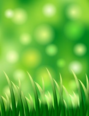 grass background for you design