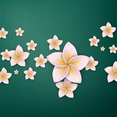 Pink plumeria (frangipani) flower background.