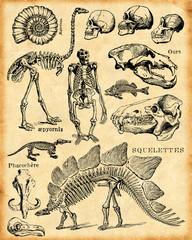 fond fossiles et squelettes