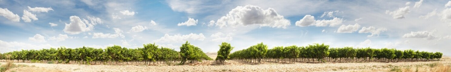 Vineyards panoramic image Wall mural