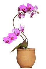Fototapeta Orchidea obraz